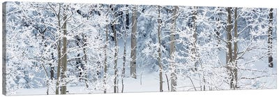 Aspen Trees Covered With Snow, Taos County, NM, USA Canvas Art Print