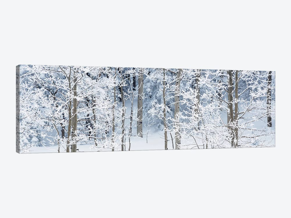 Aspen Trees Covered With Snow, Taos County, NM, USA by Panoramic Images 1-piece Canvas Art Print