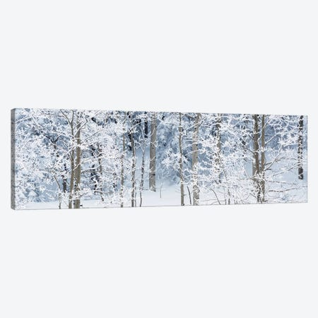 Aspen Trees Covered With Snow, Taos County, NM, USA Canvas Print #PIM15297} by Panoramic Images Canvas Art
