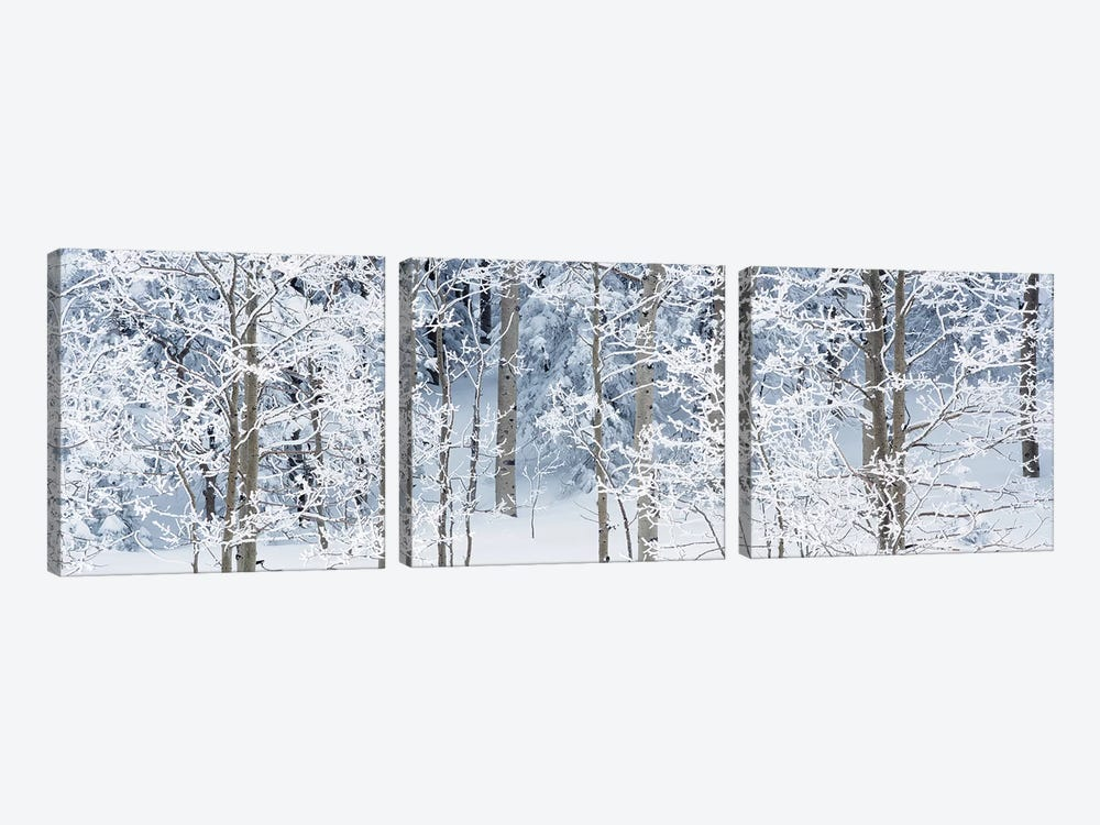 Aspen Trees Covered With Snow, Taos County, NM, USA by Panoramic Images 3-piece Canvas Art Print