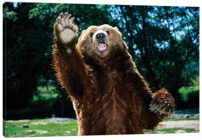 Grizzly Bear On Hind Legs Canvas Art Print