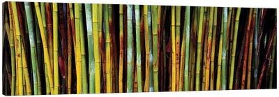 Close-Up Of Bamboos, Kanapaha Botanical Gardens, Gainesville, FL, USA Canvas Art Print