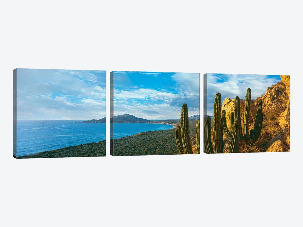 Pitaya Cactus Plants On Coast, Cabo Pulmo National Marine Park, Baja California Sur, Mexico by Panoramic Images 3-piece Canvas Artwork