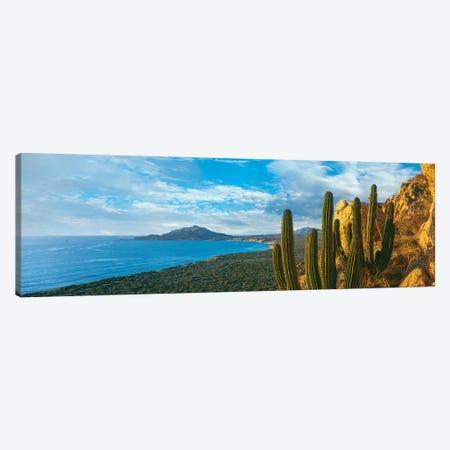 Pitaya Cactus Plants On Coast, Cabo Pulmo National Marine Park, Baja California Sur, Mexico 3-Piece Canvas #PIM15308} by Panoramic Images Canvas Art Print