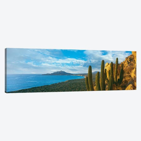 Pitaya Cactus Plants On Coast, Cabo Pulmo National Marine Park, Baja California Sur, Mexico Canvas Print #PIM15308} by Panoramic Images Canvas Art Print