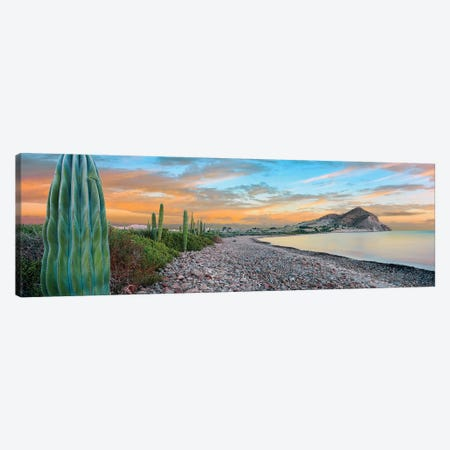 Cardon Cacti Line Along The Coast, Bay Of Concepcion, Mulege, Baja California Sur, Mexico Canvas Print #PIM15309} by Panoramic Images Canvas Art Print
