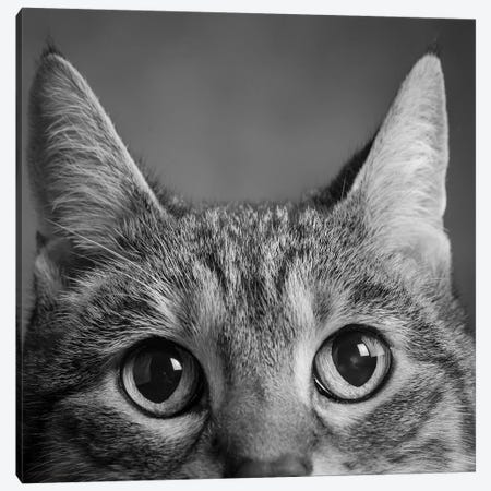 Portrait Of A Tabby Cat Canvas Print #PIM15321} by Panoramic Images Canvas Print