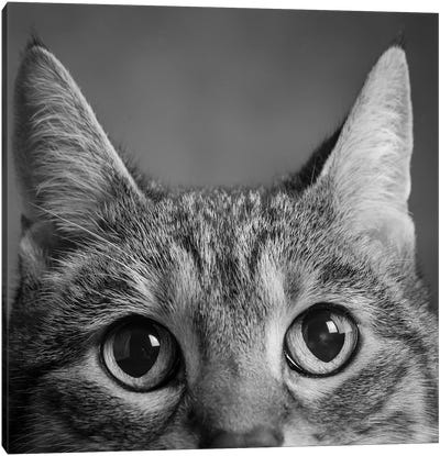 Portrait Of A Tabby Cat Canvas Art Print