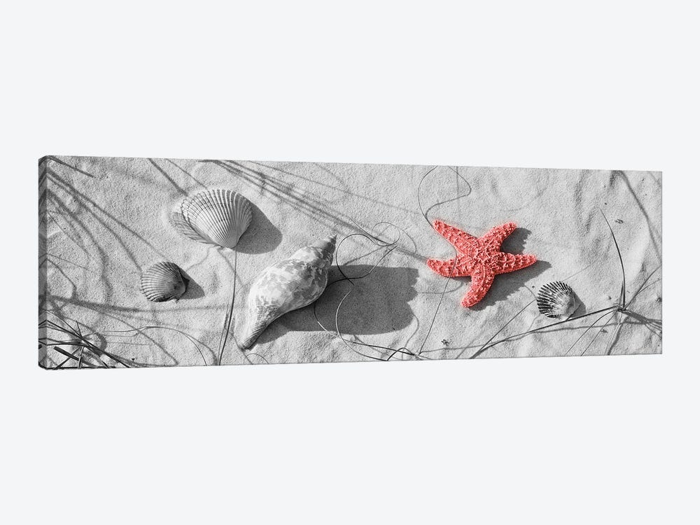 Color Pop, Close-Up Of A Starfish And Seashells On The Beach, Dauphin Island, AL, USA, Living Coral by Panoramic Images 1-piece Art Print