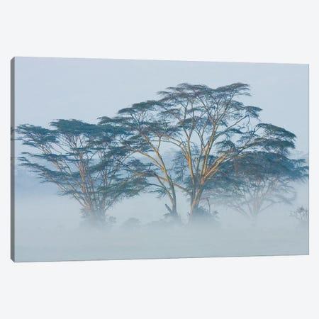 Acacia Trees covered by mist, Lake Nakuru, Kenya Canvas Print #PIM15342} by Panoramic Images Art Print