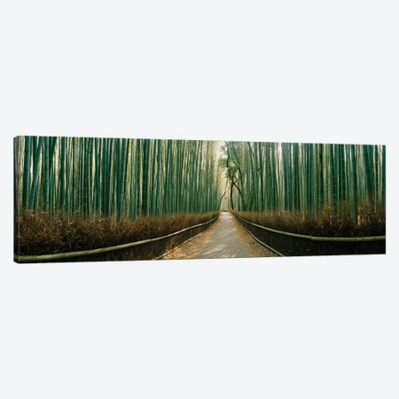 Arashiyama bamboo forest, Kyoto Prefecture, Kinki Region, Honshu, Japan Canvas Print #PIM15357} by Panoramic Images Art Print
