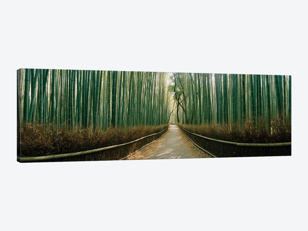 Arashiyama bamboo forest, Kyoto Prefecture, Kinki Region, Honshu, Japan by Panoramic Images 1-piece Canvas Wall Art