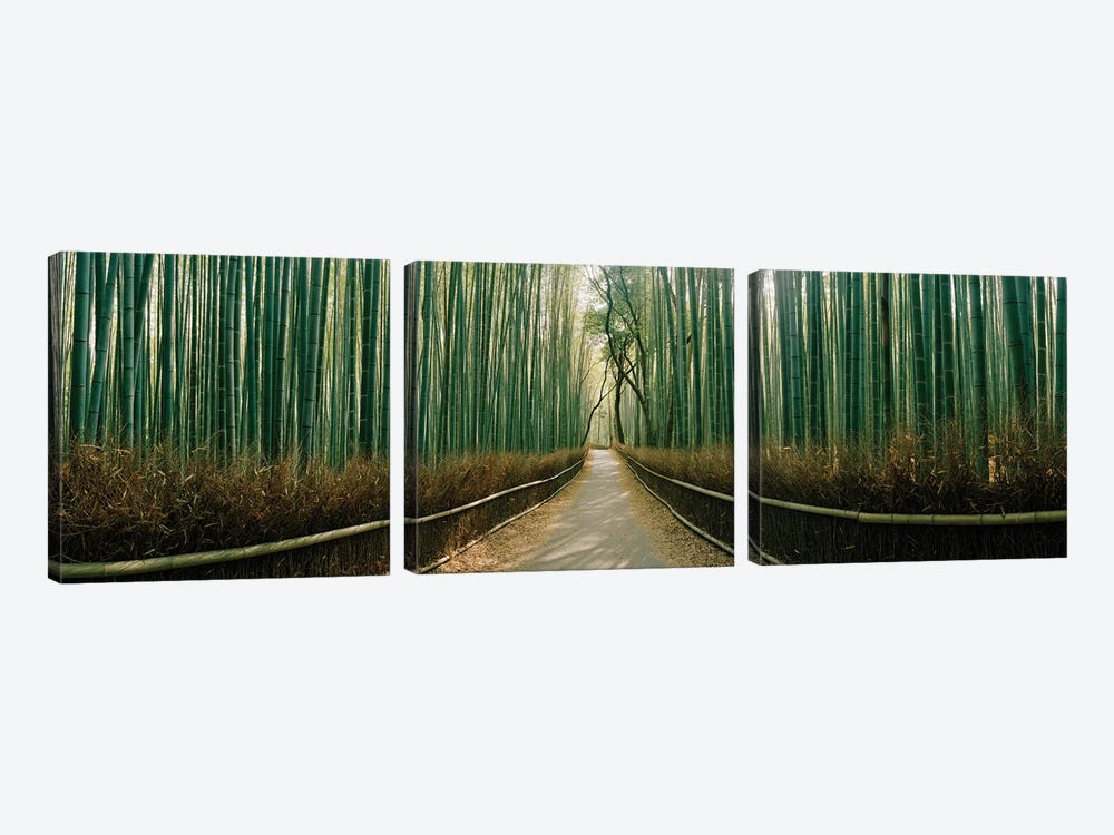 Arashiyama bamboo forest, Kyoto Prefecture, Kinki Region, Honshu, Japan by Panoramic Images 3-piece Canvas Art