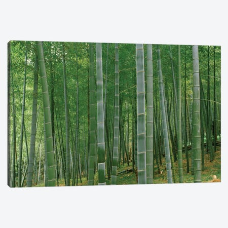 Bamboo trees in a forest, Fukuoka, Kyushu, Japan Canvas Print #PIM15366} by Panoramic Images Canvas Wall Art