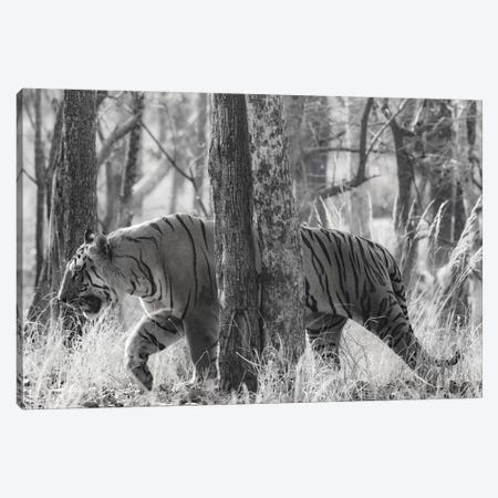 Bengal Tiger among trees, India Canvas Print #PIM15377} by Panoramic Images Canvas Art Print