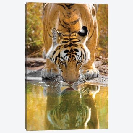 Bengal tiger reflecting in water, India Canvas Print #PIM15380} by Panoramic Images Canvas Print