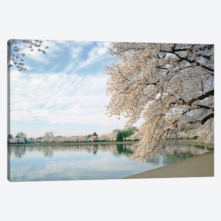 Cherry Blossom trees around the tidal basin, Washington DC, USA Canvas Print #PIM15407} by Panoramic Images Canvas Print