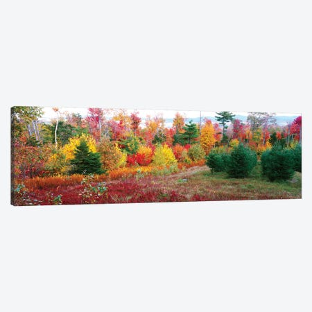 Christmas trees and fall colors, Lincolnville, Waldo County, Maine, USA Canvas Print #PIM15408} by Panoramic Images Canvas Artwork