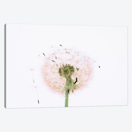 Close-up Dandelion seeds Canvas Print #PIM15421} by Panoramic Images Canvas Wall Art