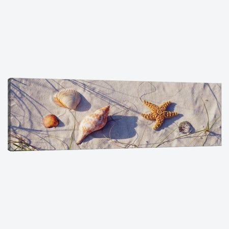 Close-up of a starfish and seashells on the beach, Dauphin Island, Alabama, USA Canvas Print #PIM15426} by Panoramic Images Art Print