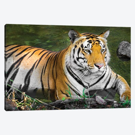 Close-up of Bengal tiger, India Canvas Print #PIM15429} by Panoramic Images Canvas Art