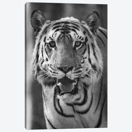 Close-up photo of bengal tiger , India Canvas Print #PIM15451} by Panoramic Images Art Print