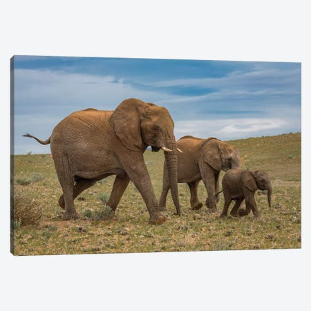 Elephants, Damaraland, Namibia, Africa Canvas Print #PIM15469} by Panoramic Images Canvas Wall Art