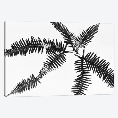 Fern Leaves Canvas Print #PIM15479} by Panoramic Images Art Print