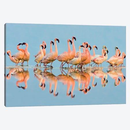 Flock of Lesser Flamingos  standing in water, Lake Nakuru, Kenya Canvas Print #PIM15485} by Panoramic Images Canvas Art Print