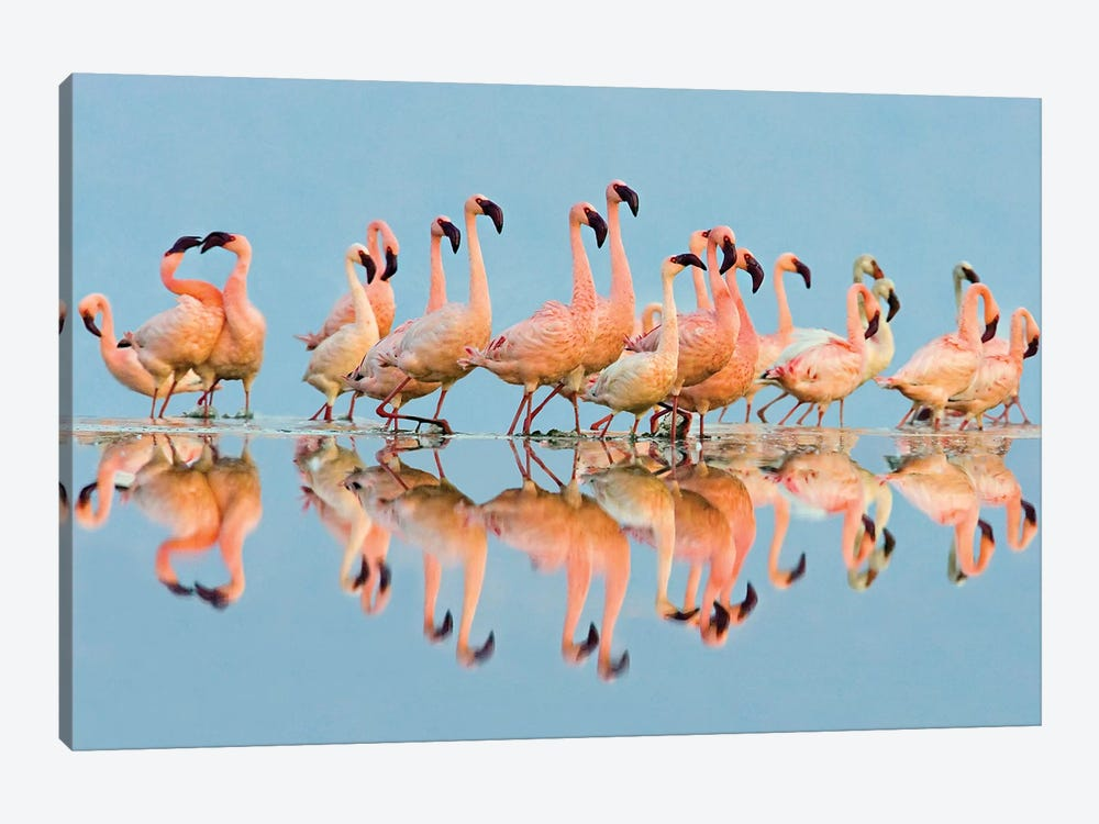 Flock of Lesser Flamingos  standing in water, Lake Nakuru, Kenya by Panoramic Images 1-piece Canvas Artwork
