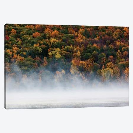 Fog over trees, Keuka Lake Vineyard, Hammondsport, Finger Lakes Region, New York State, USA 3-Piece Canvas #PIM15492} by Panoramic Images Canvas Print