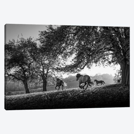 Horses running at sunset, Baden Wurttemberg, Germany Canvas Print #PIM15516} by Panoramic Images Canvas Print