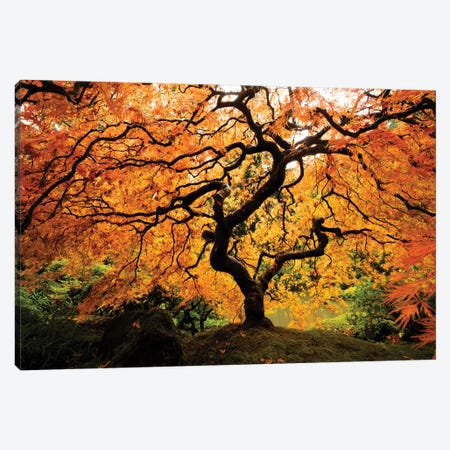 Japanese maple tree in autumn, Japanese Garden, Portland, Oregon, USA Canvas Print #PIM15545} by Panoramic Images Canvas Wall Art