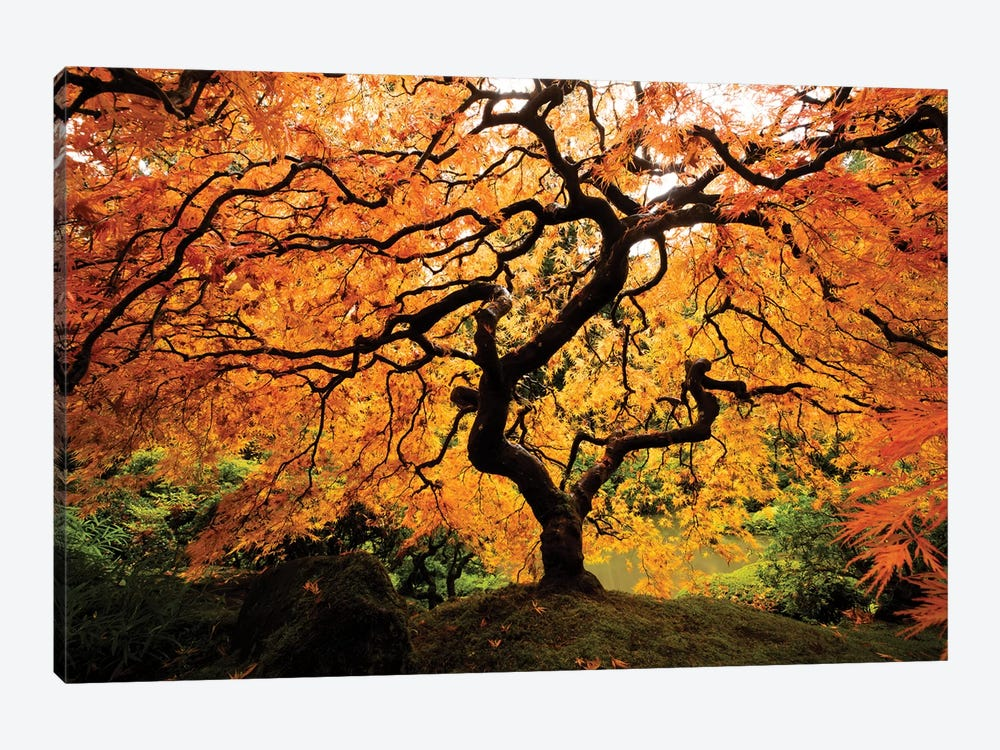 Japanese maple tree in autumn, Japanese Garden, Portland, Oregon, USA by Panoramic Images 1-piece Canvas Art Print