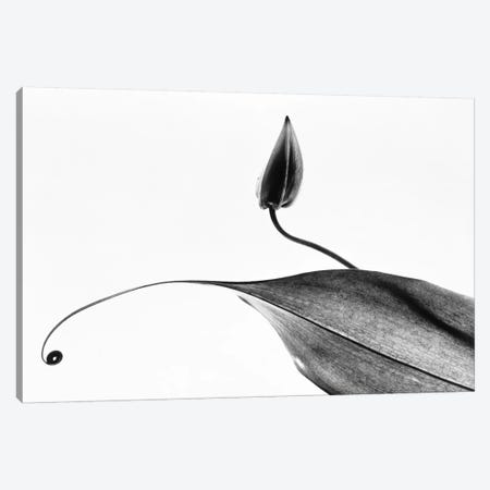 Leaves Canvas Print #PIM15553} by Panoramic Images Canvas Art
