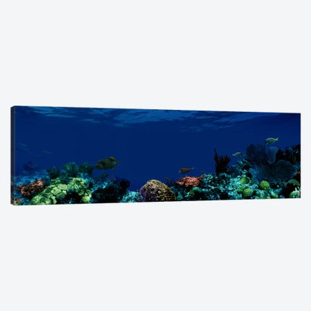 Underwater Canvas Print #PIM1556} by Panoramic Images Canvas Artwork