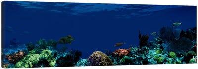 Underwater Canvas Print #PIM1556