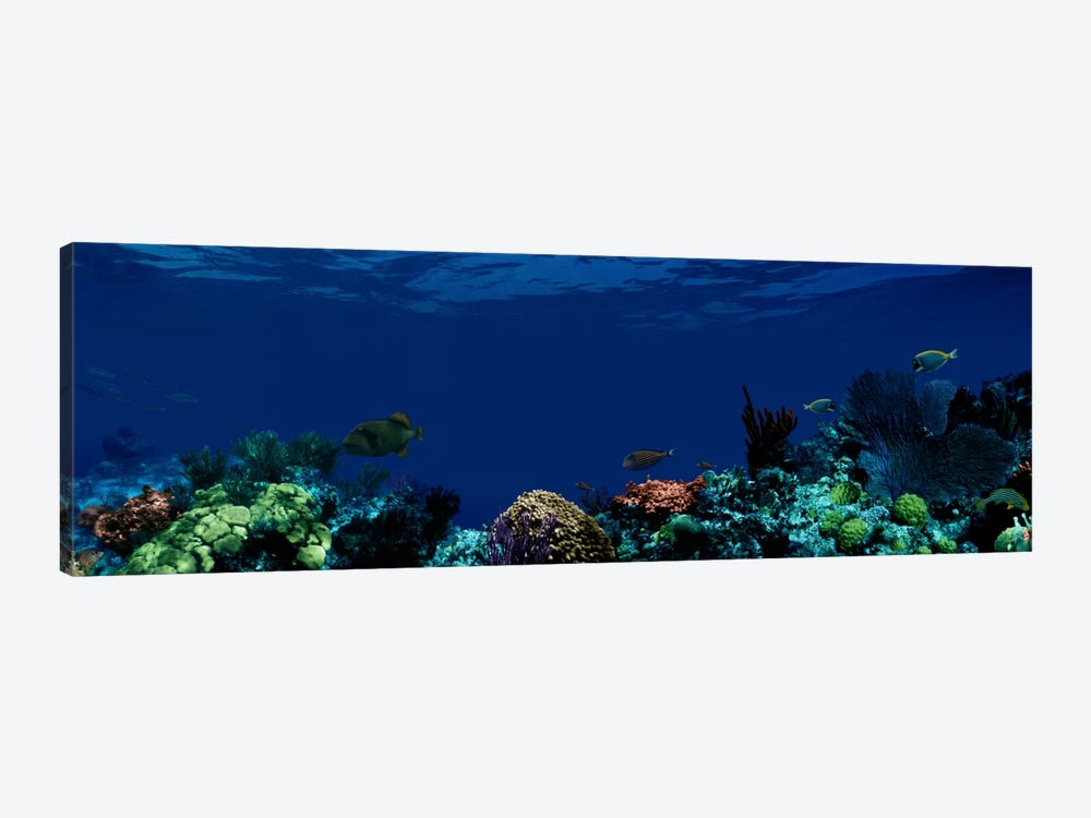 Underwater by Panoramic Images 1-piece Canvas Art Print