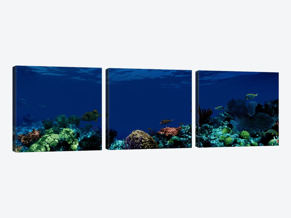 Underwater by Panoramic Images 3-piece Canvas Art Print
