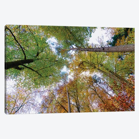 Looking up trees in autumn, Baden-Wurttemberg, Germany Canvas Print #PIM15573} by Panoramic Images Canvas Art