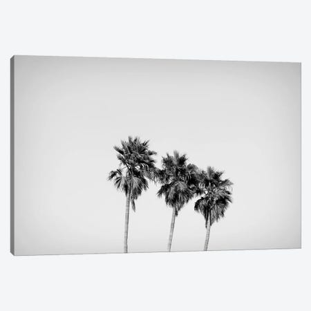 Low angle view of three palm trees, California, USA Canvas Print #PIM15582} by Panoramic Images Art Print