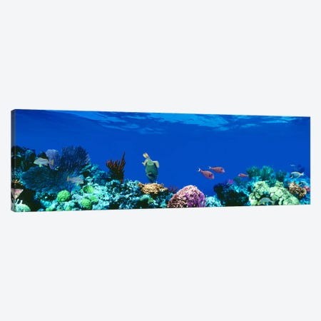 Underwater Seascape, Caribbean Sea Canvas Print #PIM1558} by Panoramic Images Canvas Art Print