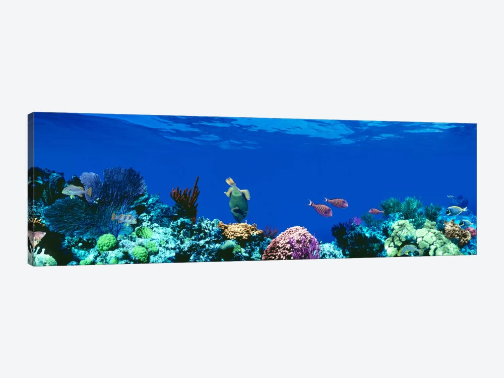 Underwater Seascape, Caribbean Sea by Panoramic Images 1-piece Canvas Print