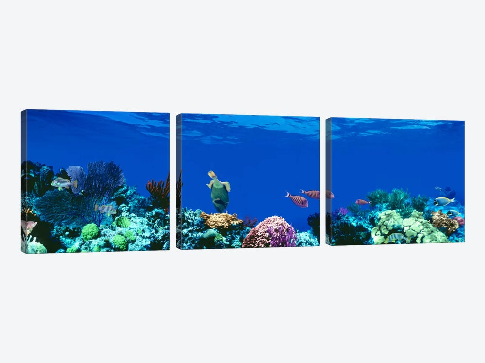 Underwater Seascape, Caribbean Sea by Panoramic Images 3-piece Canvas Print