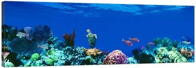 Underwater Seascape, Caribbean Sea Canvas Art Print
