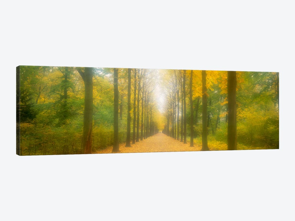 Path Schwetzingen Germany 1-piece Canvas Print