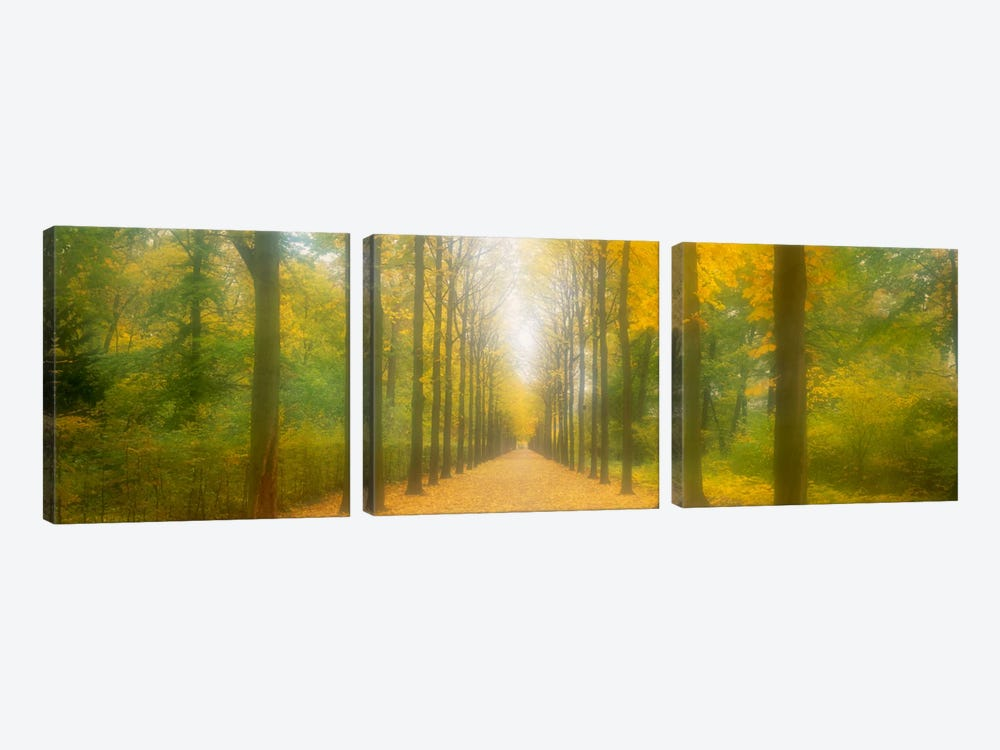 Path Schwetzingen Germany by Panoramic Images 3-piece Art Print