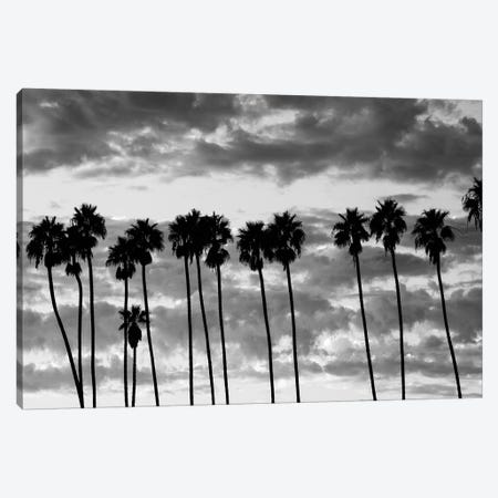Palm trees against cloudy sky, Santa Barbara, California, USA Canvas Print #PIM15627} by Panoramic Images Art Print
