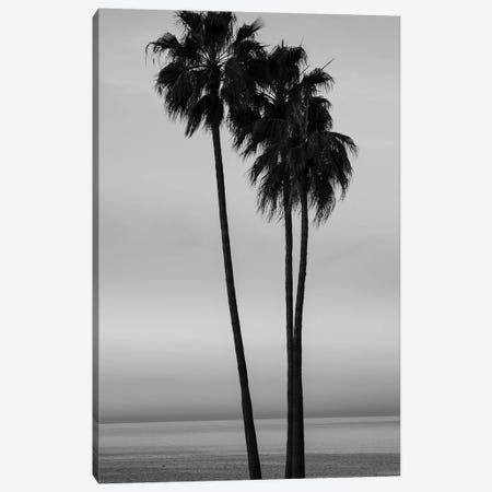 Palm trees at sunset on Santa Barbara beach, California, USA Canvas Print #PIM15628} by Panoramic Images Canvas Artwork