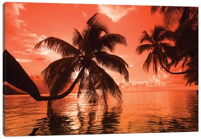 Palm trees at sunset, Moorea, Tahiti, French Polynesia Canvas Art Print